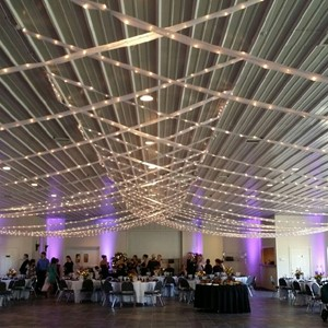 Designlight overhead bee lights in voile canopy for wedding